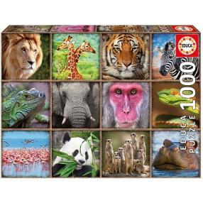 Educa - Puzzle Kolaż Dzikie zwierzęta 1000 el. 17656